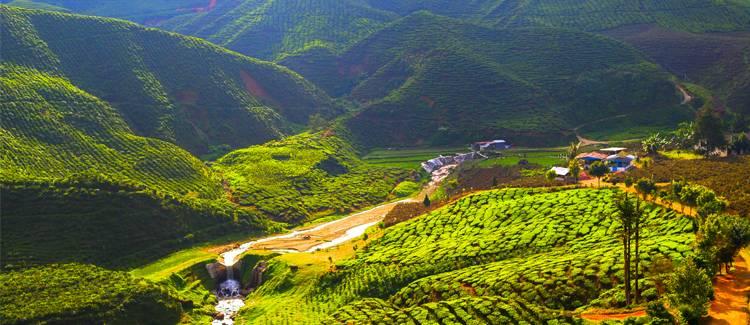cameron highlands malaezia