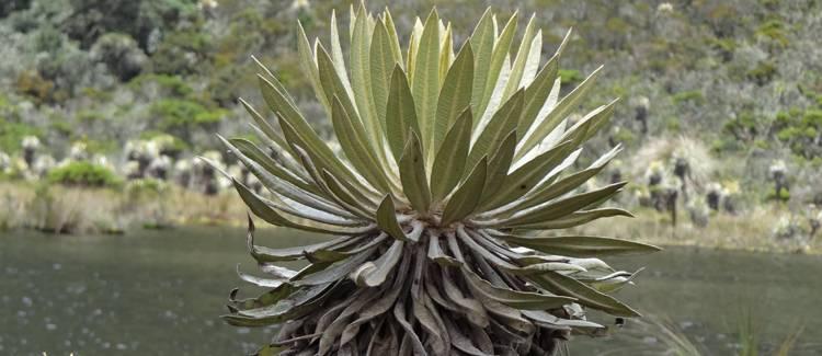 parcul national iguaque columbia