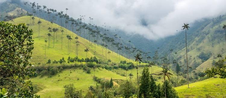 valea cocora columbia