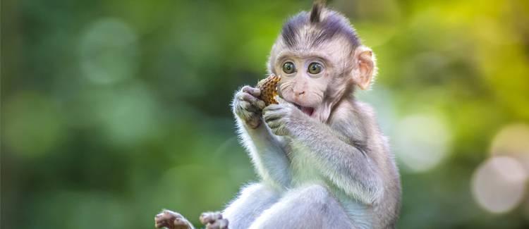 padurea maimutelor bali