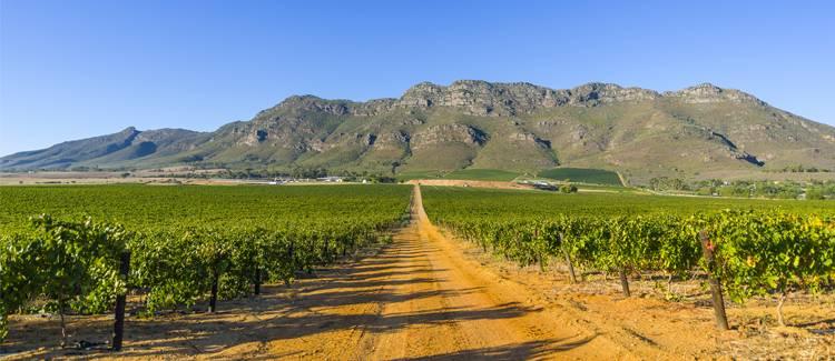 stellenbosch africa de sud